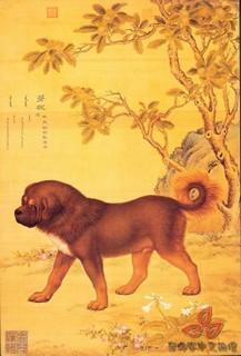 清郎世宁《十犬图》0010作品欣赏