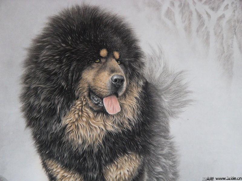 世界上最可爱 犬狗